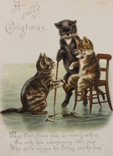 Xmas cat group