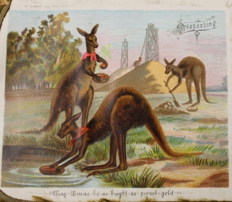 Xmas kangaroos