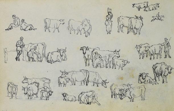 D3653 30 1_00080 cattle